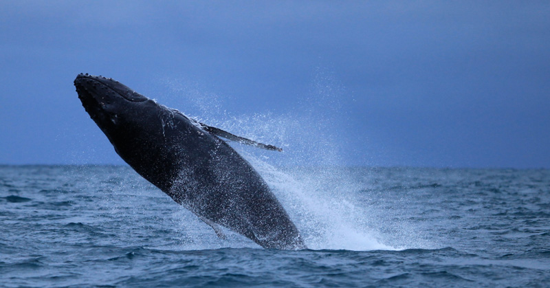 gallery-whale6