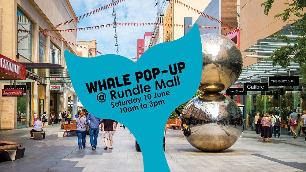 V3 wHALE Season launch Rundle Mall 2017